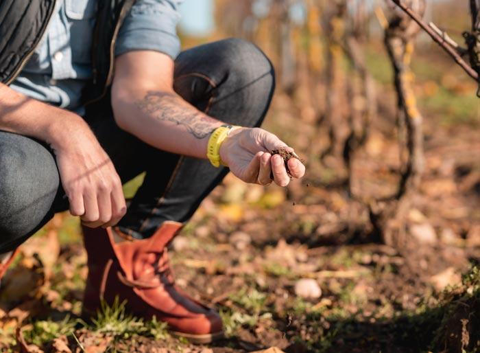 wijnbouwgrond